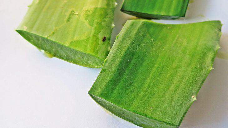 Aloe vera - rastlina nesmrteľnosti
